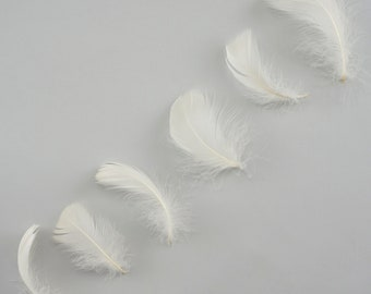 "Goose Coquille Feathers, 3-5"" Eggshell Loose Goose Feathers, Small Feathers, Arts and Craft Supplies ZUCKER®"