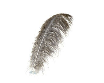 "12 NATURAL 17""+ Ostrich Feathers 1DZ - Perfect for Large Feather Centerpieces, Party Decor, Millinery, Carnival & Costume Design ZUCKER®"