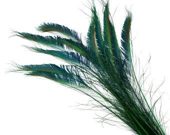 "KELLY 10pc/pkg 15-25"" Stem Dyed Peacock Sword Feathers - For Arts & Crafts, Floral Decor, Millinery and Jewelry Design ZUCKER®"