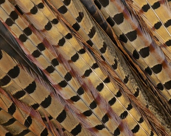 "18-20"" Natural Ringneck Pheasant Tail Feathers 10PC/PKG ZUCKER®"