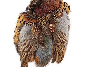 Pheasant Feather Pelt, 1 Piece Complete Natural Ringneck Pheasant Skin Pelt Without Neck and Tails, Rare Fly Tying & Jewelry Supply ZUCKER®