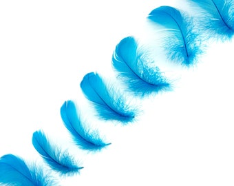"""Goose Coquille Feathers, 3-5"""" Dark Turquoise Loose Goose Feathers, Small Feathers, Arts and Craft Supplies ZUCKER®"""