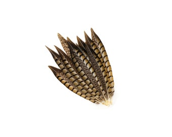 "Tail Feathers, 12 pcs Natural 8-12"" Lady Amherst Pheasant Feathers For Millinery, Fashion, Cultural Arts & Carnival Costume Design ZUCKER®"