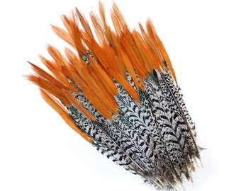 "Lady Amherst Pheasant Feathers, 10PCS 6-8"" Natural Pheasant Orange Top, Loose Feathers For Jewelry Making, Crafting and Art Supplies ZUCKER®"