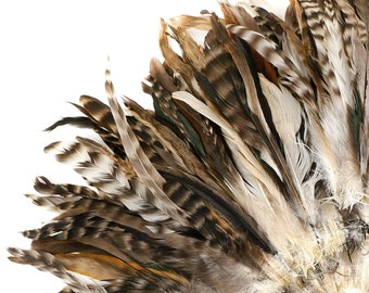 """Natural Chinchilla Rooster Feathers, 8-10"""" Long Barred Rooster Feathers, Strung Bulk Feathers For Carnival & Costume Design ZUCKER®"""