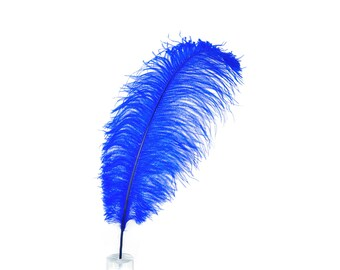 "12 ROYAL 17""+ Ostrich Feathers 1DZ - Perfect for Large Feather Centerpieces, Party Decor, Millinery, Carnival & Costume Design ZUCKER®"