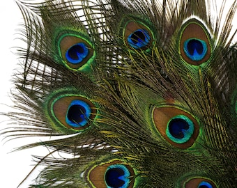 "Natural Peacock Feathers, 8-15"" Natural Peacock Bird Feathers, Short Peacock Feathers, Natural Cut Peacock Tail Feathers ZUCKER®"