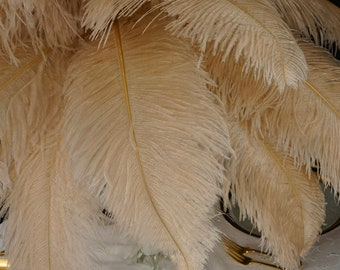 """Large Ostrich Feathers 25 Pieces 17-25"""" Prime Ostrich Femina Wing Plumes BEIGE Wedding Centerpiece, Carnival Feathers ZUCKER® USA"""