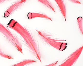 Pheasant Feathers, Coral Lady Amherst Pheasant Crest Plumage, Loose Short Natural Feathers for DIY Jewelry, Crafting & Fly Tying  ZUCKER®