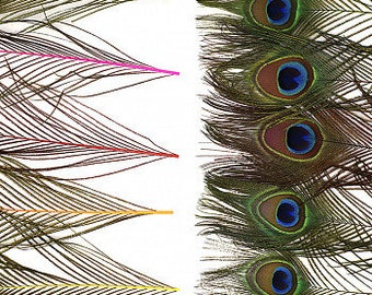 "BULK 8-15"" NEON Mix Dyed Peacock Tail Feathers - 100pc/pkg Stem Dyed Peacock Tail Feathers with Large Iridescent Eyes ZUCKER®"