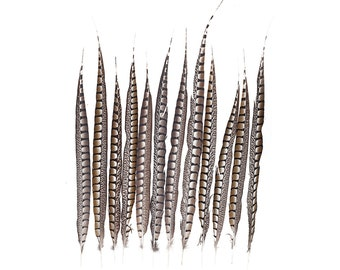 "Tail Feathers, Long Natural 20-30"" Lady Amherst Pheasant Feathers For Millinery, Fashion, Cultural Arts & Carnival Costume Design ZUCKER®"