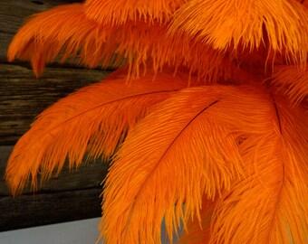 "Ostrich Feathers 17-20"" ORANGE, 1 to 25 pc, Ostrich Plumes, Carnival Samba, Ostrich Drab, Mardi Gras, Centerpieces, Feather Fan, ZUCKER® USA"