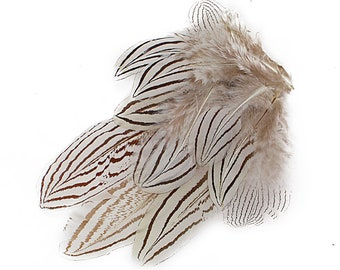 "Natural Black & White Silver Pheasant Plumage, Unique Feathers, 1 DOZEN 2-4"", Dyed Silver Pheasant Barred Plumage ZUCKER®"