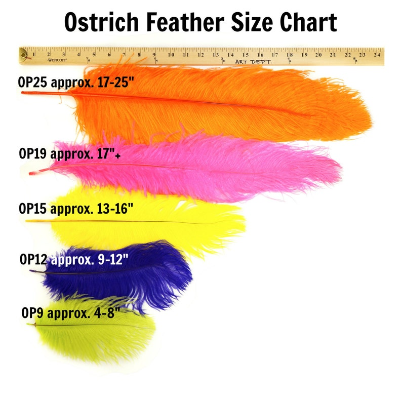 Ostrich Feathers 9-12 CORAL Ostrich Drabs Carnival /& Costume Feathers ZUCKER\u00aeDyed and Sanitized USA Centerpiece Floral Supplies