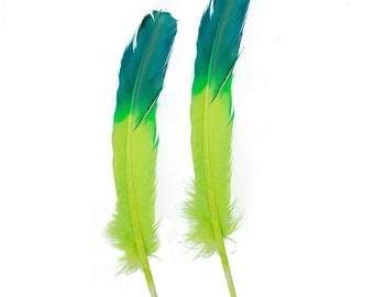 Turquoise & Lime Two Tone Ombre Tipped Turkey Round Feathers  For Cultural Arts and Crafts, Carnival and Costume Design ZUCKER®