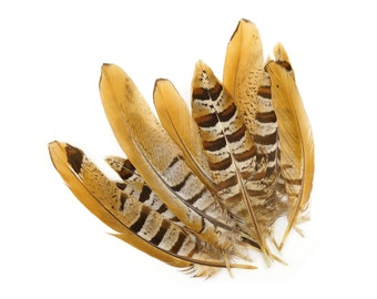 """Venery Pheasant Tail Feathers 4-6"""", 12 pcs Natural Brown Stripe Pheasant Feathers For Millinery, Fashion, Cultural Arts & Jewelry ZUCKER®"""