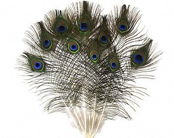 """8-15"""" Natural Peacock Feathers - Small Eyes - 25pc/pkg ZUCKER®"""