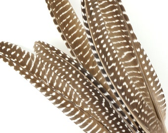 """Natural Guinea Hen Fowl Rounds 4-8"""" Black & White Polka Dot Feathers For DIY, Cultural Arts, Smudging Wand, Dream Catcher, Carnival ZUCKER®"""