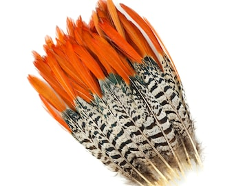 """Lady Amherst Pheasant Feathers, 8-10"""" Natural Pheasant Orange Top, Loose Feathers For Jewelry Making, Crafting and Art Supplies ZUCKER®"""