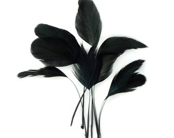 """4-6"""" Black Iridescent Stripped Rooster Coque Tail Feathers 10pc/pkg for Millinery, Jewelry and Mask Making, Floral, Hair & Fashion ZUCKER®"""