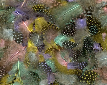 """Guinea Feathers, Dyed Pastel Mix 1-4"""" Guinea Hen Polka Dot Loose Plumage Feathers & Craft Supply ZUCKER®"""