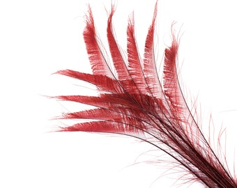 """Bleach Dyed Peacock Sword Feathers 10 to 100 Pieces 15-25"""" BURGUNDY, Floral Decor, Millinery, Jewelry Design ZUCKER® Dyed & Sanitized in USA"""