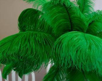 "Ostrich Feathers 17-20"" KELLY Green, 1 to 25 pcs, Ostrich Plumes, Carnival Samba, Ostrich Drab, Mardi Gras, Centerpieces, Fan ZUCKER® USA"