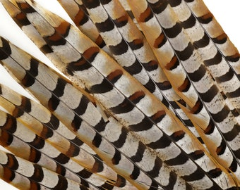 """Venery Pheasant Tail Feathers 16-20"""", 12 pcs Natural Brown Stripe Feathers, Floral, Fashion, Carnival, Cultural Costume Regalia Feathers"""
