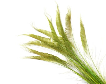 """Bleach Dyed Peacock Sword Feathers 10 to 100 Pieces 15-25"""" LIME Green, Floral Decor, Millinery, Jewelry Design ZUCKER® Dyed & Sanitized USA"""