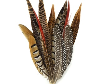 """Feathers, Pheasant Feathers, Guinea Feathers, 6-12"""" Assortment of Natural Feathers - 12 Piece Festival Mix BPH-Festival--N ZUCKER®"""