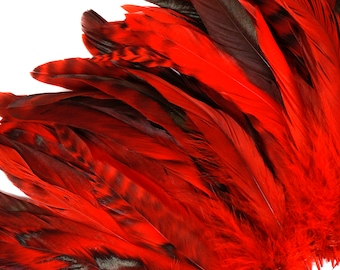 """Red Chinchilla Rooster Feathers, 8-10"""" Long Barred Rooster Feathers, Dyed Strung Bulk Feathers For Carnival & Costume Design ZUCKER®"""