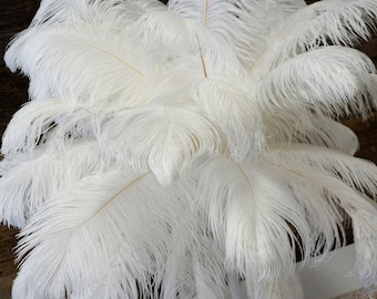 """Ostrich Feathers 17-20"""" WHITE, 1 to 25 pcs, Ostrich Plumes, Carnival Samba, Ostrich Drab, Mardi Gras, Centerpieces, Feather Fan, ZUCKER® USA"""