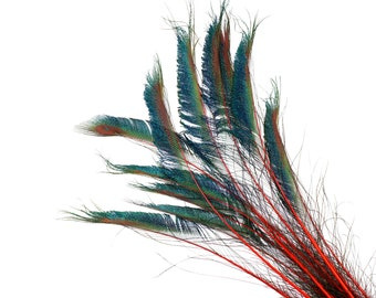"""Peacock Sword Stem Dyed Feathers, 10 to 100 pieces 15-25"""" - RED, Floral Decor, Millinery, Jewelry Design ZUCKER® Sanitized in USA"""