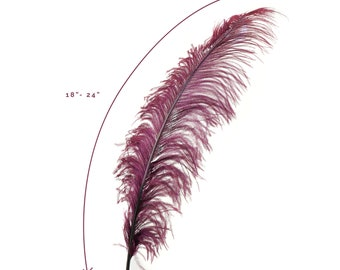 """Ostrich Feathers, Burgundy Ostrich Feather Spads 18-24"""", Centerpiece Floral Supplies, Carnival & Costume Feathers ZUCKER®"""
