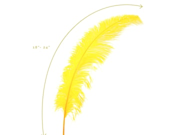 """Ostrich Feathers, Gold Ostrich Feather Spads 18-24"""", Centerpiece Floral Supplies, Carnival & Costume Feathers ZUCKER®"""