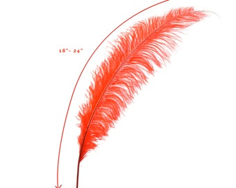 """Ostrich Feathers, Red Ostrich Feather Spads 18-24"""", Centerpiece Floral Supplies, Carnival & Costume Feathers ZUCKER®"""