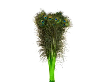 Lime Green Dyed Peacock Feathers, 25-40 inches Stem Dyed Peacock Tail Feathers, Peacock Tail Feathers with Large Iridescent Eyes ZUCKER®