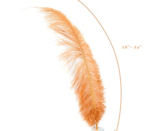 """Ostrich Feathers, Cinnamon Ostrich Feather Spads 18-24"""", Centerpiece Floral Supplies, Carnival & Costume Feathers ZUCKER®"""