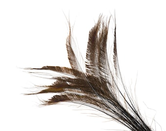 """Bleach Dyed Peacock Sword Feathers 10 to 100 Pieces 15-25"""" BROWN - Floral Decor, Millinery, Jewelry Design ZUCKER® Dyed & Sanitized in USA"""