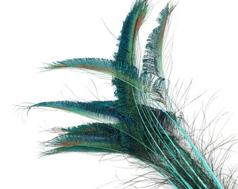 """Peacock Sword Stem Dyed Feathers, 10 to 100 pieces 15-25"""" - Light TURQUOISE Floral Decor, Millinery, Jewelry Design ZUCKER® Sanitized in USA"""
