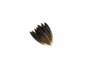 """Tail Feathers, 12 pcs Natural 4-6"""" Lady Amherst Pheasant Feathers For Millinery, Fashion, Cultural Arts & Carnival Costume Design ZUCKER®"""