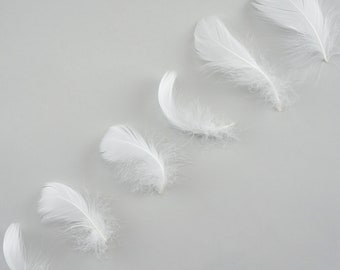 """Goose Coquille Feathers, 3-5"""" White Loose Goose Feathers, Small Feathers, Arts and Craft Supplies ZUCKER®"""