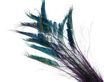 """Peacock Sword Stem Dyed Feathers, 10 to 100 pieces 15-25"""" - REGAL Purple, Floral Decor, Millinery, Jewelry Design ZUCKER® Sanitized in USA"""