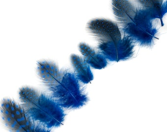 """Guinea Feathers, Dyed Royal Blue 1-4"""" Guinea Hen Polka Dot Loose Plumage Feathers & Craft Supply ZUCKER®"""