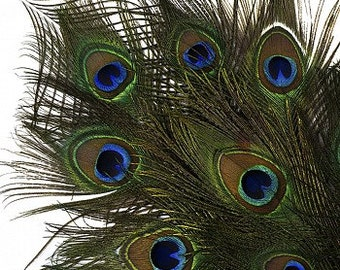 """25pc/pkg 25-35"""" Natural Peacock Feathers - Peacock Tail Feathers with Large Iridescent Eyes ZUCKER®"""