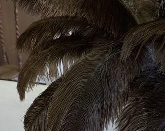 "Ostrich Feathers 17-20"" NATURAL, 1 to 25 pcs, Ostrich Plumes, Carnival Samba, Ostrich Drab, Mardi Gras, Centerpiece, Feather Fan ZUCKER® USA"