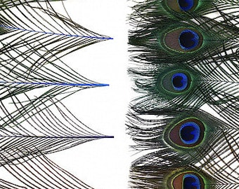 """Bulk Peacock Eye Feathers 8-15"""" - 100 pieces Mix Dyed JEWEL Tones Over Natural Peacock Tail Feathers Bulk  ZUCKER® USA"""