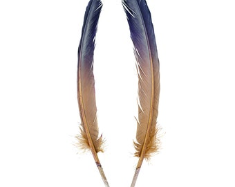 Navy & Tan Two Tone Ombre Tipped Turkey Round Feathers  For Cultural Arts and Crafts, Carnival and Costume Design ZUCKER®