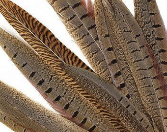 """Natural Ringneck & Golden Assorted Pheasant Tail Feathers - 8-14"""" 10PC/PKG"""