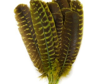 """Wild Turkey Feathers, Natural Barred Quills 8-12"""" Dyed CHARTRUESE for Millinery, Dream Catchers, Arts & Crafts, Decorations,  ZUCKER®"""